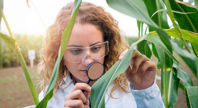 Plant Tissue Testing Victoria Australia